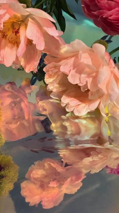 تحميل خلفيات ورد طبيعي لون برتقالي باهت