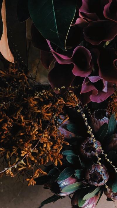 تحميل خلفيات ورد طبيعي لون بنفسجي