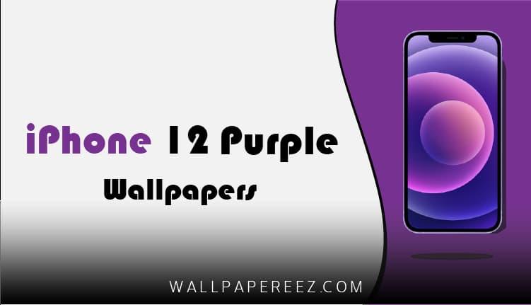 تحميل خلفيات iPhone 12 Purple الاصلية برابط مباشر