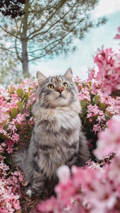خلفيات قطط كيوت للموبايل (صور بسس HD)