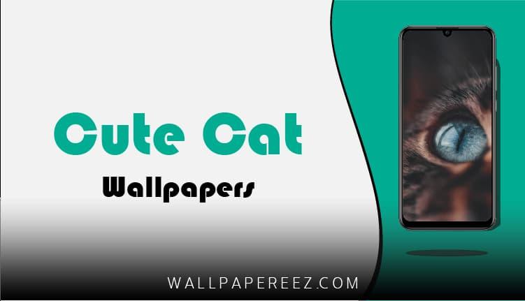 خلفيات قطط كيوت للموبايل (صور قطط HD)